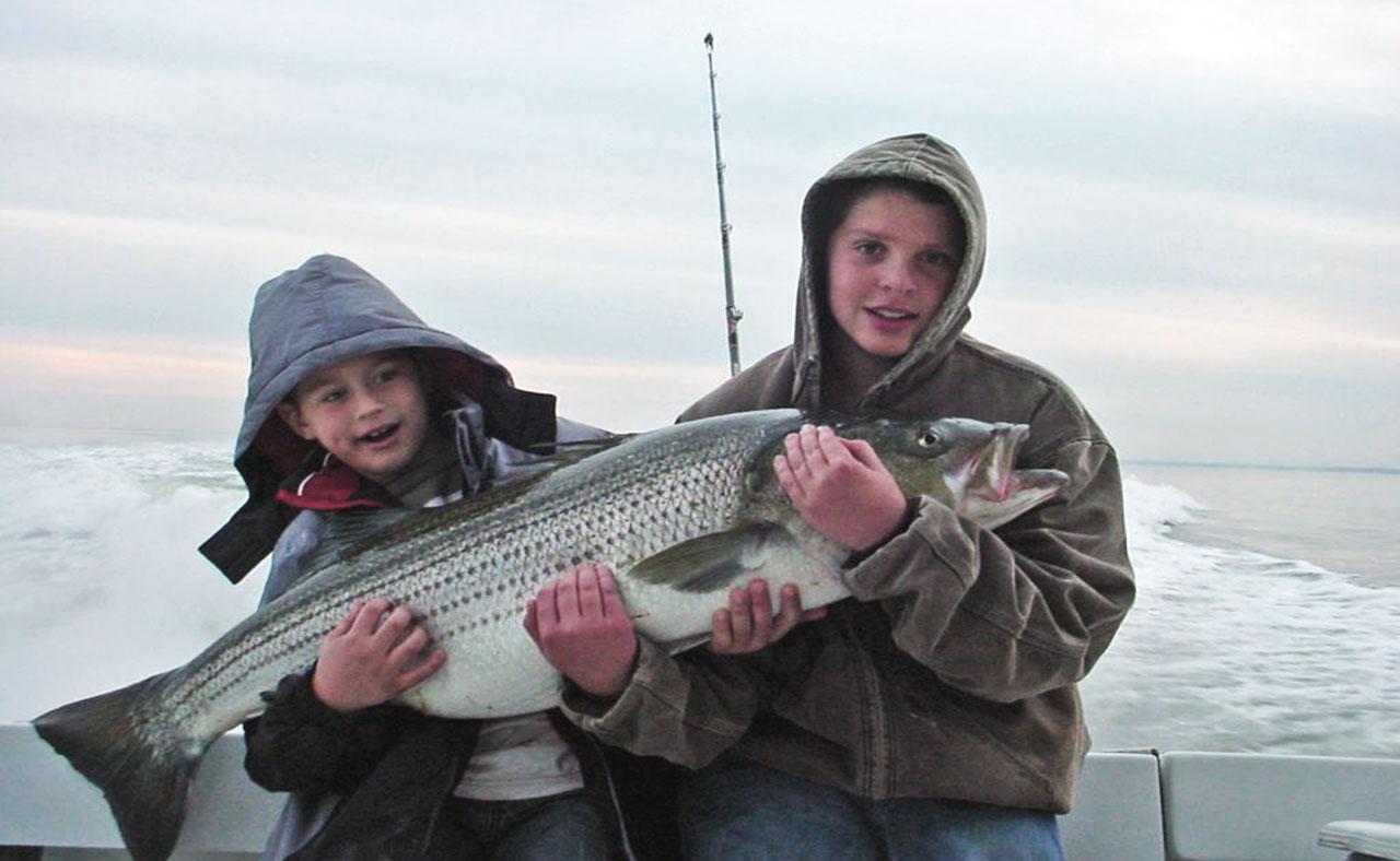 Striped bass chesapeake bay story for Maryland state fish