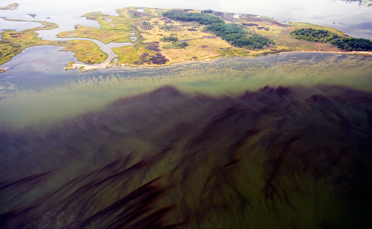 <p>An explosion of phytoplankton led to this harmful algal bloom on the York River, a tributary of the Chesapeake Bay.</p>