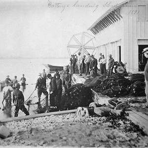 At fishing hatchery and lighthouse landing shad seine in 1891, Susquehanna River entrance, Maryland. (Photo courtesy of National Archives).