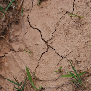Photo taken in Hollymead, VA of cracked ground indicates drought and low rainfall. (Photo courtesy of Flickr commons: J. Rowe).